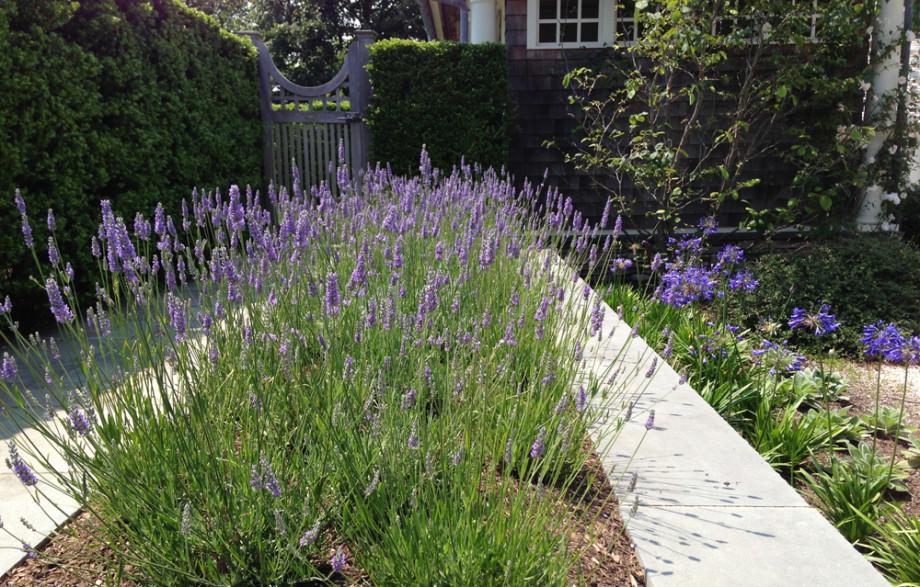 Private Residence Bellport Waterside Garden Ronda M