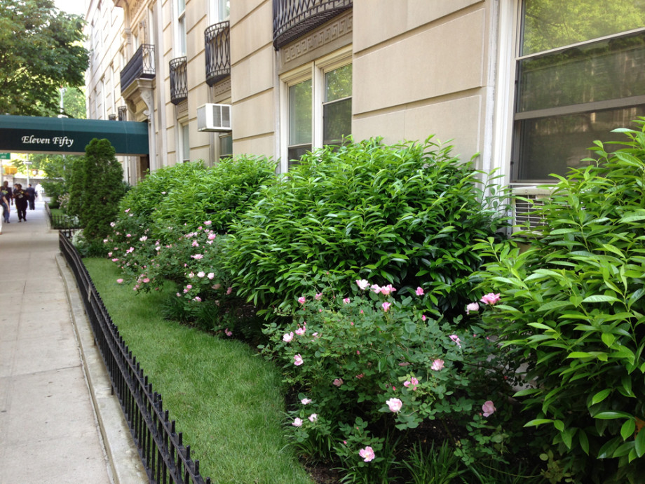 NYC Apartment Co Op 1150 Fifth Avenue Ronda M Brands