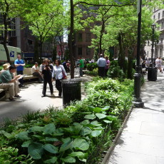 Shade garden plantings at the north end