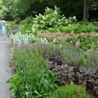 heather_garden