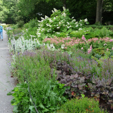 Re-creating shrub structure and foliage contrast in the 600-foot-long perennial bed