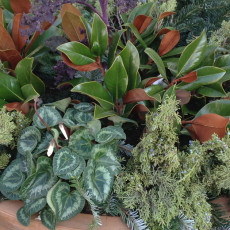 Winter container plants and greenery
