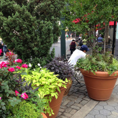 Container plantings in Richard Tucker Park