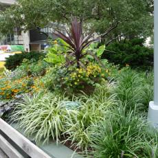Summer seasonal plantings