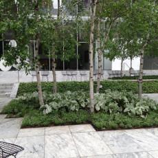 Summer annuals: Caladium 'Candidum' and Euphorbia 'Diamond Frost'