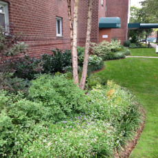 "Flowering shrubs and annuals soften ""foundation"" plantings"